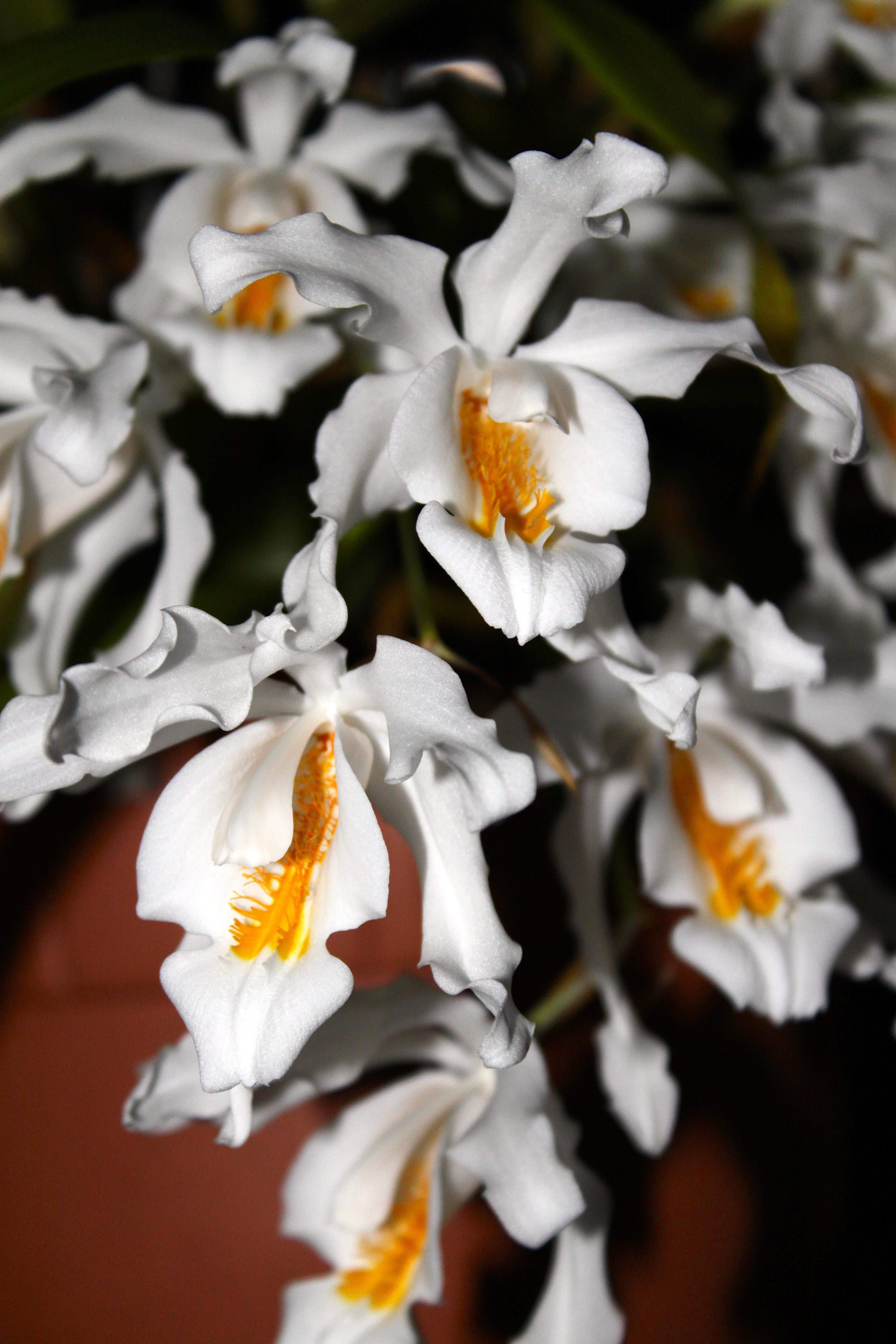 roland schettler seite 5 roland 39 s orchideen blog. Black Bedroom Furniture Sets. Home Design Ideas