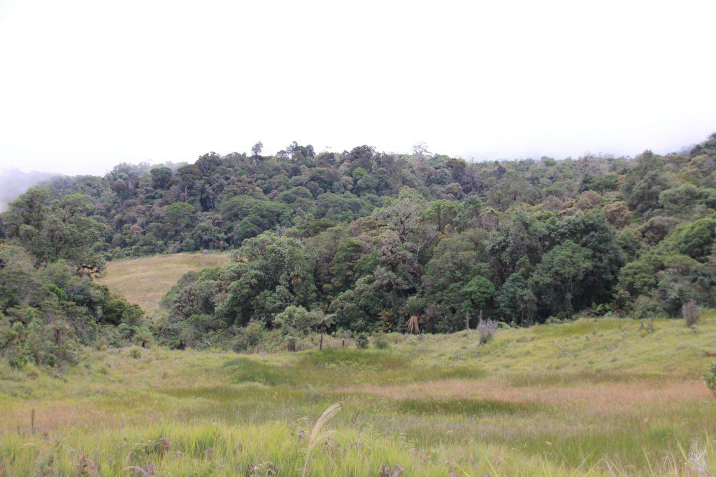 Grasland und Restwälder Tari 2400m Höhe